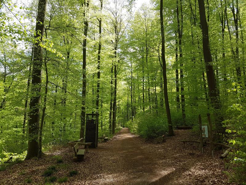 Buchenwald, Nationalpark, Kellerwald-Edersee, Nordhessen